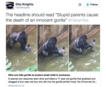 dita_knights_on_twitter___the_headline_should_read__stupid_parents_cause_the_death_of_an_innocent_gorilla___harambe_https___t_co_j0bb0wdk2w_-e1465244248165